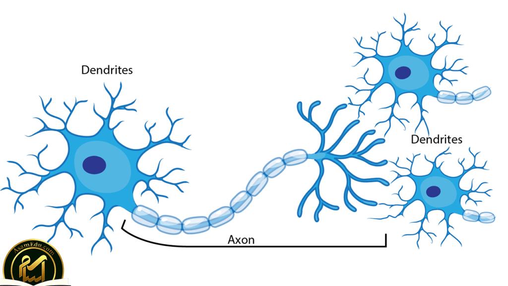 نورون